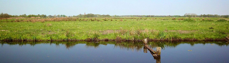 Grasland en watertjes in Loosdrecht